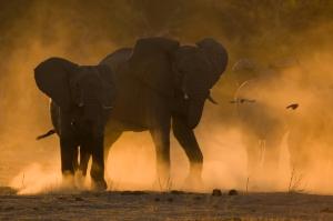 manus-elephant