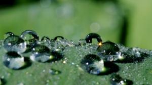 Drops_of_rain_01
