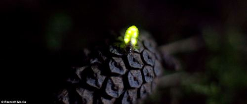A Firefly Moment
