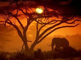 Elephant sun