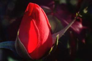 A flower2