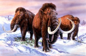 mammoth-wooly-mammoth-989514862