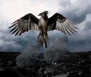 phoenix-bird1